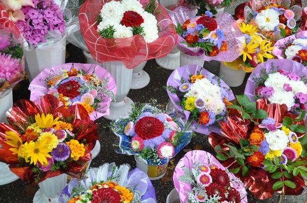 Цветы к 1 сентября садовая